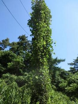 木ではなく電柱.jpg